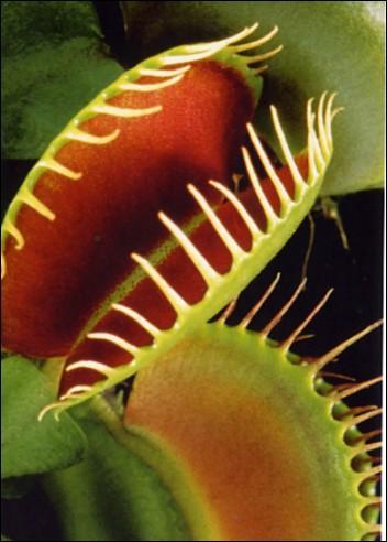 Anzuchtsets anzucht set die kleine horror box for Obstfliegen in pflanzen
