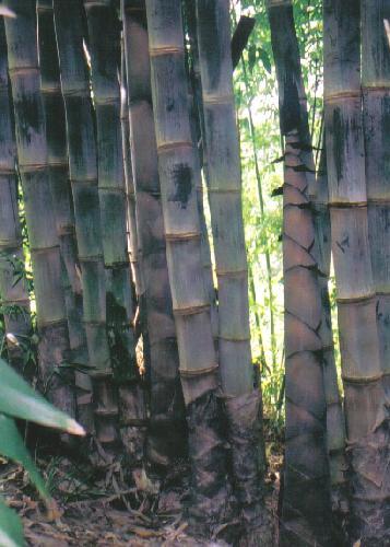 anzuchtsets anzucht set bambus garten. Black Bedroom Furniture Sets. Home Design Ideas