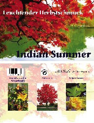 Artikel-Bild-Indian Summer