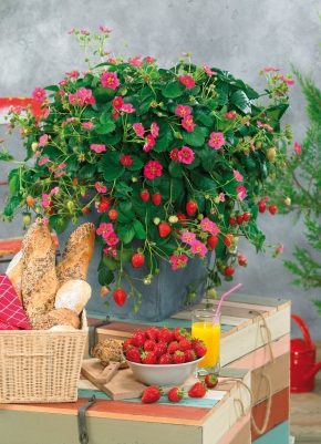Balkon Gemuse Obst