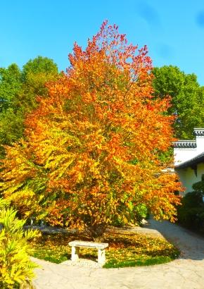 Samen rarit ten laubb ume lebkuchenbaum - Lebkuchenbaum kaufen ...